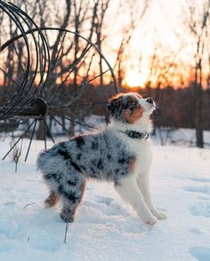 puppies in the snow / puppies in snow . puppies in snow video . puppies in snow golden retrievers . puppies in snow wallpaper . puppies in snow so cute . puppies in snow husky . puppies in the snow . Super Cute Puppies, Cute Baby Dogs, Cute Little Puppies, Cute Dogs And Puppies, Cute Baby Animals, Funny Animals, Doggies, Funny Dogs, Cutest Dogs