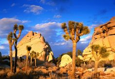 Joshua Tree National Park || Image link: http://www.national-park.com/wp-content/uploads/2016/04/Welcome-to-Joshua-Tree-National-Park.jpg