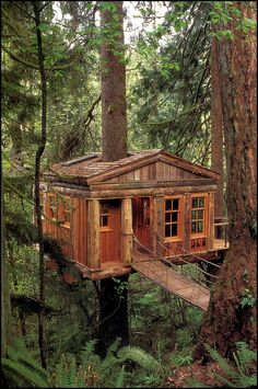 treehouse masters henry nelson inspiration treehouse point treehouse masters pinterest treehouse