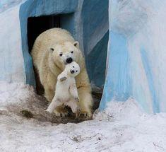 Cute Penguin Adorable Animals Family Polar Bear Family Animal Families