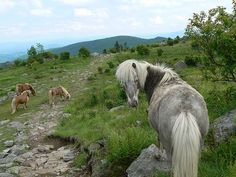 Mount Rogers, highest peak in Virginia, on the Appalachian Trail.    My absolute favorite hiking place growing up.  The wild horses were the best part♥