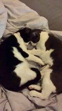 How my boyfriend's cats like to snugglehttps://i.redd.it/ph0rmpmx07i01.jpg