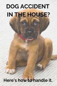 Dog Accident In The House Here S How To Handle It Blog Dogs