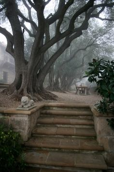 stone steps to huge trees
