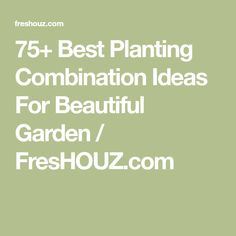 75+ Best Planting Combination Ideas For Beautiful Garden / FresHOUZ.com
