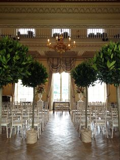 Trees and urns at Hampton Court House. By fairynuff-flowers.co.uk Hampton Court House, Wedding Venues, Wedding Ideas, Courthouse Wedding, Wedding Planner, Ali, Random Stuff, Wedding Flowers, Fairy
