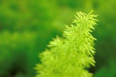 Young Green Spiky Leaves by Shreeharsh Ambli on 500px