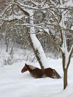 some photos of snow are breath taking but the ones with animals goes even deeper that that. I Love Snow, I Love Winter, Winter White, Especie Animal, Mundo Animal, Snow Scenes, Winter Scenes, Beautiful Horses, Animals Beautiful