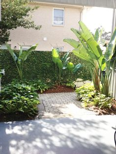 New Orleans Garden Design design french backyard garden backyard is typical of the new orleans courtyard style of landscaping Ponseti Landscaping Old Metairie Lakeview Uptown New Orleans Garden Design And Maintenance