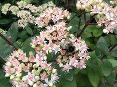 Planten voor een tuin op droge grond Buxus, Garden Of Eden, Garden Plants, Perennials, Flowers, Outdoor, Xeriscaping, Summer 3, Gras
