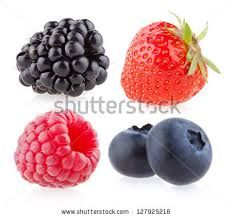 clipart blueberries blackberries - Google Search