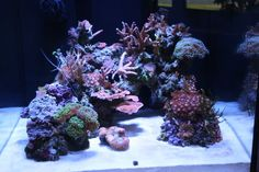 Show me your cube aquascaping pictures! - Reef Central Online Community
