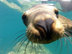 GoPro: Diving with Sea Lions -  Baja California Sur, México - March 2013 by @iTrompis