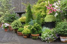 Simple Patio Garden using dwarf conifers and other plants