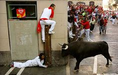 Running of the Bulls in Pamplona Spain - The AdvenTourist Funny Animal Pictures, Funny Photos, San Fermin Pamplona, Funny Fails, Funny Memes, Hilarious, Running Of The Bulls, Let's Have Fun, Funny Bunnies