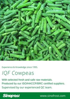 FROZEN ASPARAGUS BEANS IQF ASPARAGUS BEANS FROZEN COWPEAS  IQF COWPEAS  FROZEN ASPARAGUS BEANS SUPPLIER CHINA IQF ASPARAGUS BEANS SUPPLIER CHINA FROZEN COWPEAS SUPPLIER CHINA IQF COWPEAS SUPPLIER CHINA FROZEN VEGETABLES SUPPLIER CHINA FROZEN FRUITS SUPPLIER CHINA  MORE INFO: cwl@sinofrost.com.cn Asparagus Beans, Frozen Vegetables, Raw Materials, Green Beans, China, Fresh, Food, Raw Material, Essen