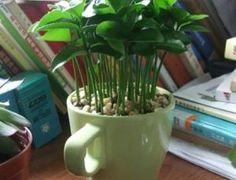 Plante sementes de limão e deixe a casa cheirosa! - Ideal Receitas