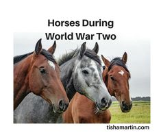 Horses During World War Two