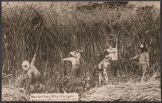 William H. Martin (American, 1865–1940). Harvesting Wheat in Iowa, 1909. The Metropolitan Museum of Art, New York. Gift of Charles Isaacs and Carol Nigro, 2007 (2007.460.8)