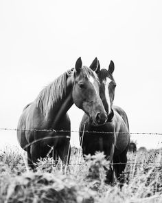 9 Astonishing Family Appearance Grayscale Photo Of Horses Brown And White Horse, Brown Horse, White Horses, Free Horses, Two Horses, Love Images, Love Pictures, Horse Face, Horse Photos