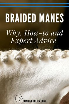 A definitive guide to braided horse manes. Learn the history, purpose, types of braided horse manes and how to get started and succeed at mane braiding now. Horse Mane Braids, Horse Hair Braiding, Horse Stalls, Horse Barns, Western Horse Tack, Western Saddles, Barrel Racing Tips, Dressage Horses, Friesian Horse
