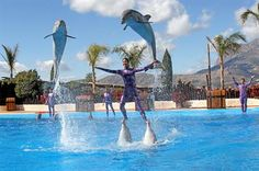 From defying gravity to swimming with dolphins, the Alicante region has some of the best theme parks in Europe.