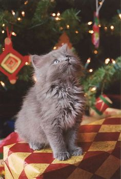 Kitty For Christmas