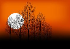 Sunset tree silhouette vector graphics download