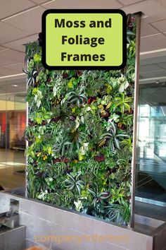 We offer all forms of preserved mosses for decorations including preserved plans, preserved ferns and cork bark for stunning displays. these materials are preserved and stabilized and need no watering or maintenance leaving them in the original state for a timeless display. #mossproducts #mossballs #preservedmoss #mossplanters #mosswreaths #flatmoss #naturedesign #interiorideas #houseinterior #officeinterior #officespace #commercialdesign #livingroomideas #commercialinteriordesign… Money Tree Bonsai, Money Trees, Board Rooms, Moss Letters, Moss Decor, Ivy Wall, Moss Art, Hotel Reception, Preserved Roses
