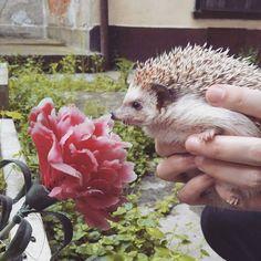 #flower #spring #hedgehog