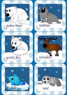 arctic animals english flashcards