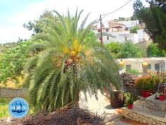 - Zorbas Island apartments in Kokkini Hani, Crete Greece 2020 Crete Greece, Spring Break, Island, Vacation, Plants, Vacations, Islands, Winter Vacations, Holidays Music