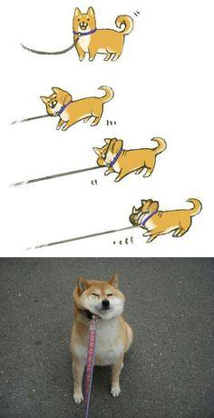 Let doge go!
