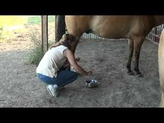 Using Peppermint Essential Oil For Leg Swelling In Horses