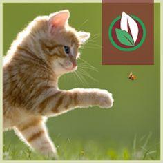 Herrmanns Bio-Katzennahrung by www. Cats, Animals, Cat Food, Dog Food, Farm Animals, Gatos, Animales, Animaux, Kitty