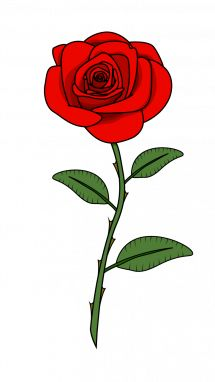 How to Draw Red Rose step 11