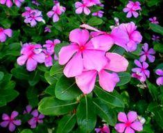 Weed, Beauty Hacks, Beauty Tips, Beautiful Flowers, Herbalism, Nature Photography, Herbs, Leaves, Plants