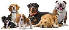 Έχετε φανταστεί ποτέ, αν θα ήσασταν σκύλος τι ράτσα θα ήσασταν σύμφωνα με τις συνήθειές σας; Κάντε το τεστ, απαντήστε στις ερωτήσεις και δείτε το αποτέλεσμα.