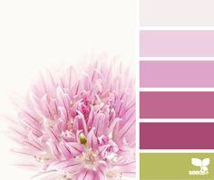 New bedroom pink master design seeds Ideas Colour Pallette, Colour Schemes, Color Combos, Color Patterns, Pink Palette, Pantone, Design Seeds, Flora, World Of Color
