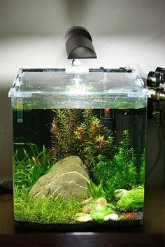 ... beauty on Pinterest Planted Aquarium, Aquascaping and Aquar