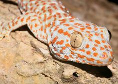 http://milugar2012.blogspot.com.es/2012/08/el-gecko.html