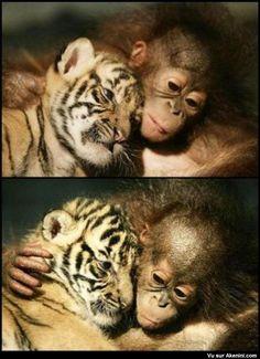 Photos Fun N°1568 - Tendresse animale