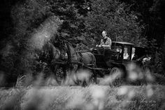 Wedding in the Netherlands, with Frysian horses and carriage