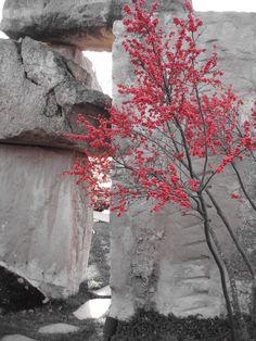 Color Accent color splash landscapes | color splash, photography, landscape