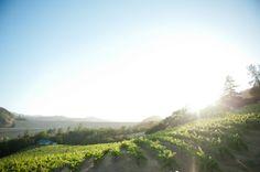 Simply Gorgeous Vineyard Real #Wedding in California | OneWed #DestinationWedding #sonoma