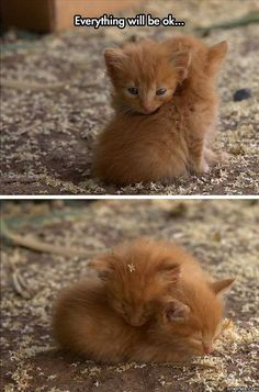 Cute Funny Animals, Cute Baby Animals, Animals And Pets, Cute Cats, Funny Cats, Farm Animals, Kittens Cutest, Cats And Kittens, Orange Kittens