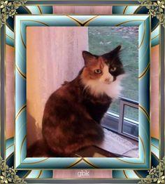 My cat Callie