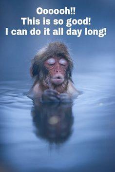 Japanese macaque from Jigokudani Snow Monkey Park Baby Animals, Cute Animals, Nature Animals, Wildlife Nature, Japanese Macaque, Wallpaper Fofos, Cute Baby Monkey, Monkey Park, Animal Kingdom
