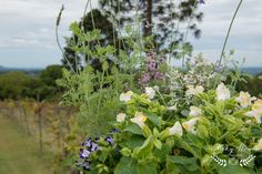 A beautiful little Flaxton Gardens wedding on the Sunshine Coast Sunshine Coast, Lifestyle Photography, Garden Wedding, Plants, Beautiful, French Tips, Planters, Plant, Planting