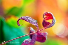Fine Art Nature Photography by Alex Greenshpun - The Photo Argus
